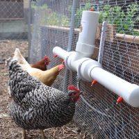 ساخت دانخوری و آبخوری پرنده در خانه